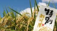 和歌山県産 特別栽培木酢米10kg