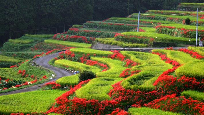 心和む、農村の原風景「棚田と彼岸花の里」江里山