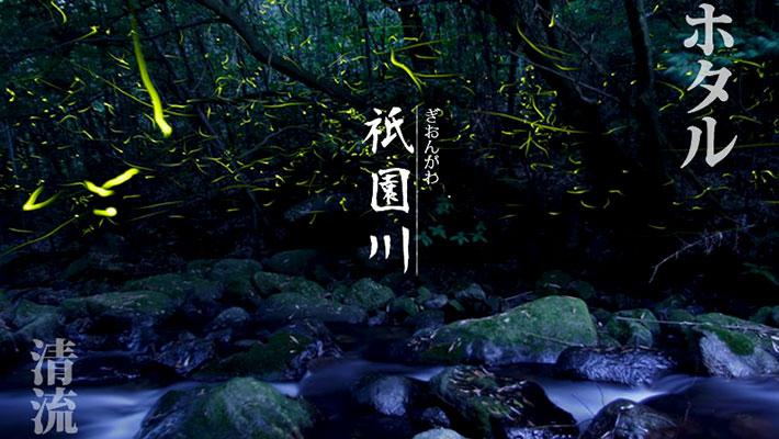 初夏のクリスマスツリー「祇園川のホタル」