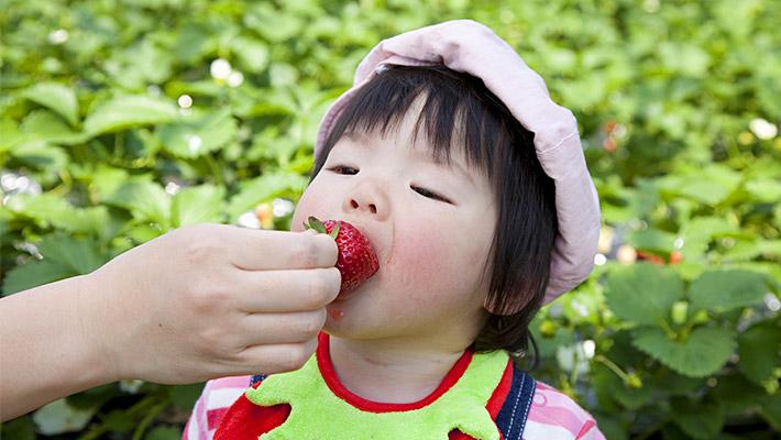イチゴと子供