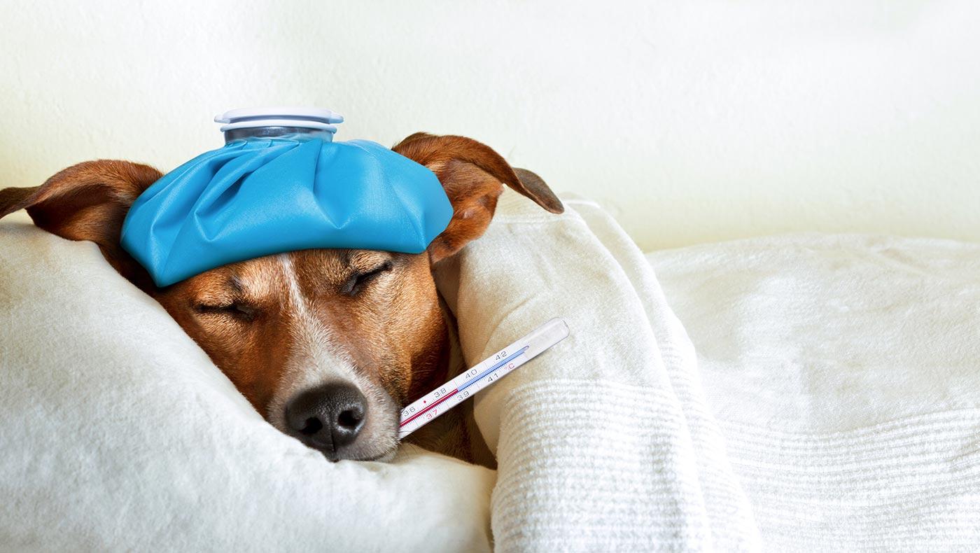 ふるさと納税ではじめるインフルエンザ対策