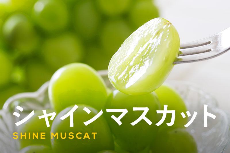 シャインマスカットが美味しい!食べ方や旬の時期、人気の秘密を紹介!