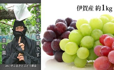 種なし巨峰他 高級ぶどう詰合わせ 約1kg 伊賀産