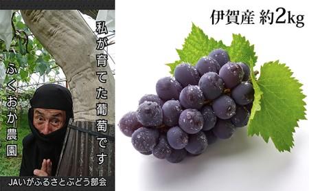 巨峰ぶどう(種あり・種なし)味くらべセット 約2kg 伊賀産