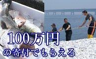 地曳網漁業体験&新鮮な海の幸バーベキュー!