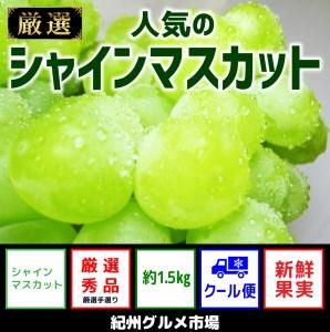 【新鮮果実】人気のシャインマスカット 約1.5Kg 紀州グルメ市場