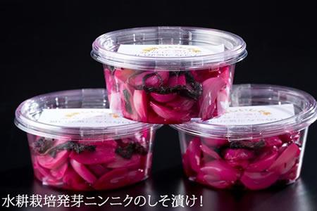 美味しく元気!しそ漬け発芽ニンニク 5千円コース