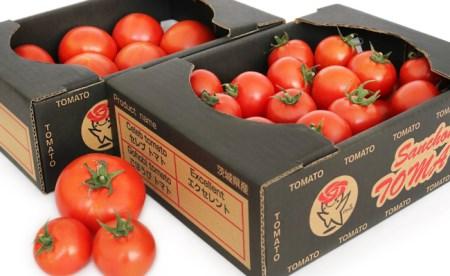 五霞町の特選高糖度トマト