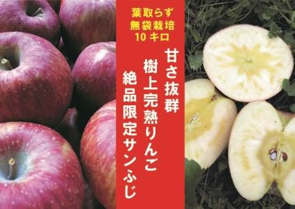 【期間限定】樹上完熟「葉取らずサンふじ」10kg